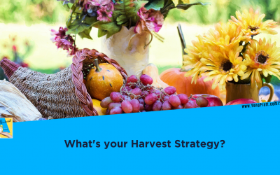 What's Your Harvest Strategy